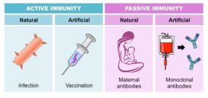 types-of-immunity_natural and artificial vaccination in kathmandu nepal
